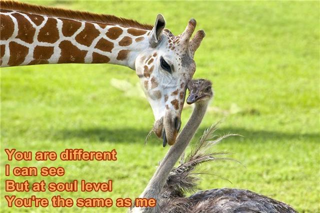 giraffeemu