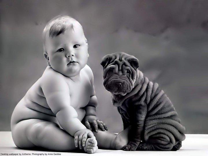 wrinkledbabydog