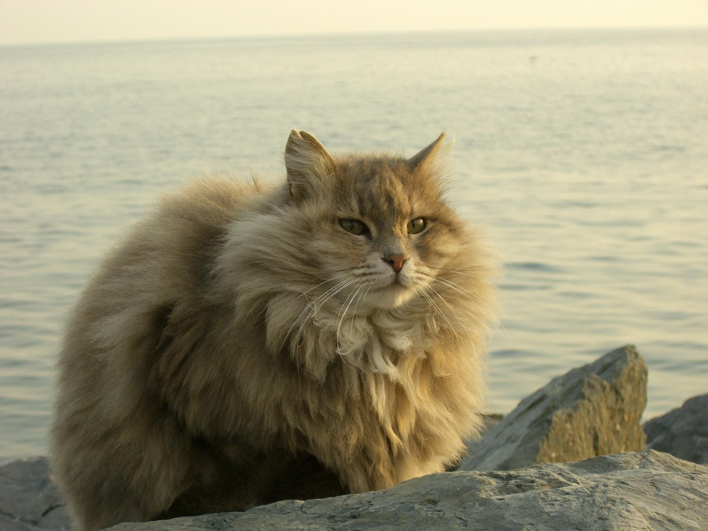fluffy cat | Source of Inspiration