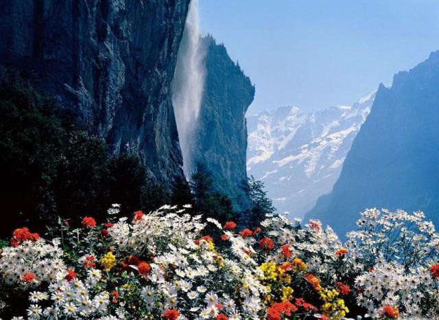 mountains with flowers