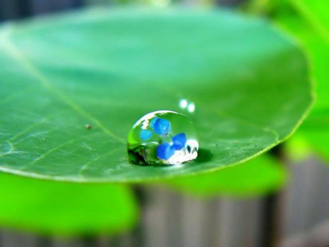 flower in drop