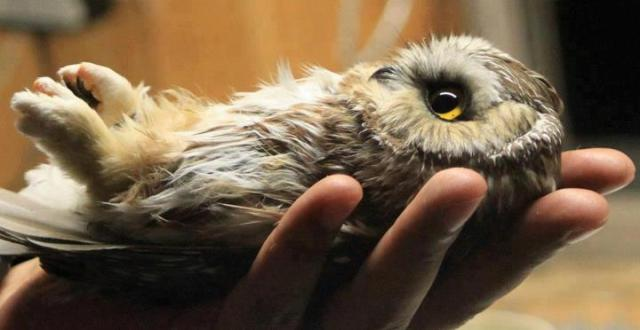owl in hand