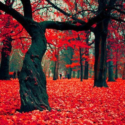 red leaves, black tree