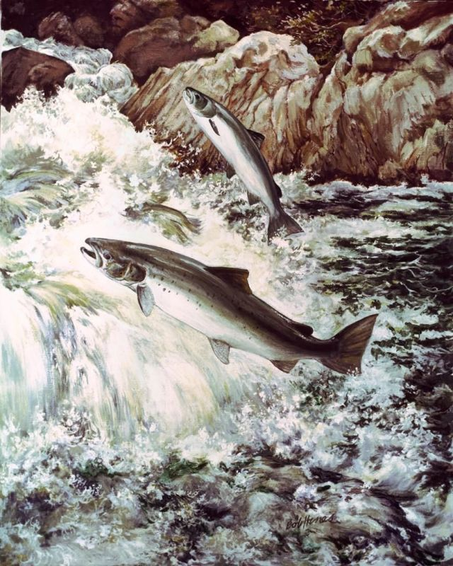salmon-fish-swimming-upstream