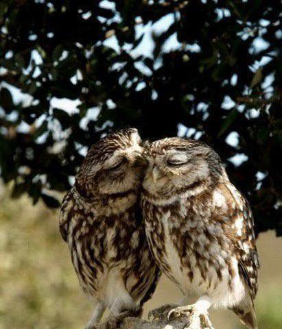 loving owls