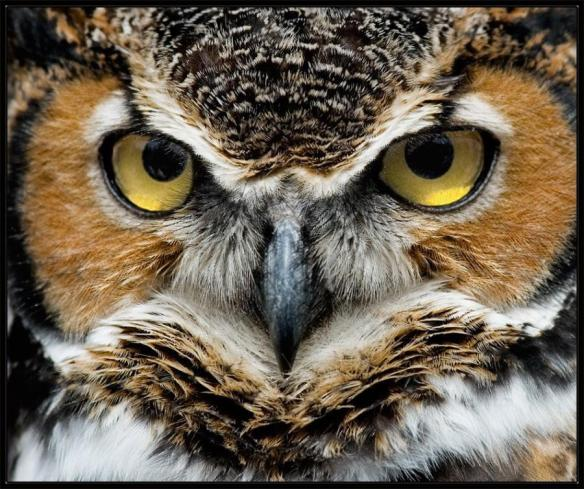 Image result for owl wisdom