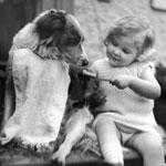 brushing_dog_girl
