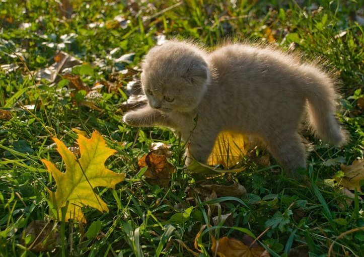 kitten with leaf