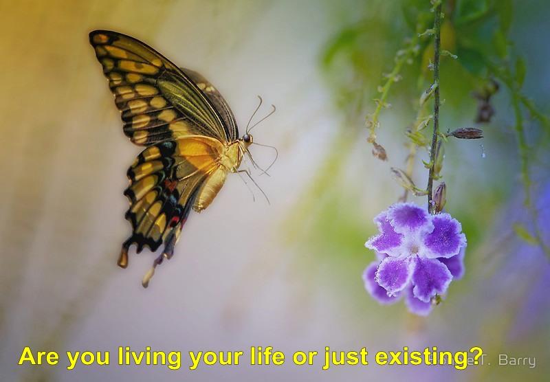 butterfly poem 11