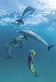 dolphinswim1