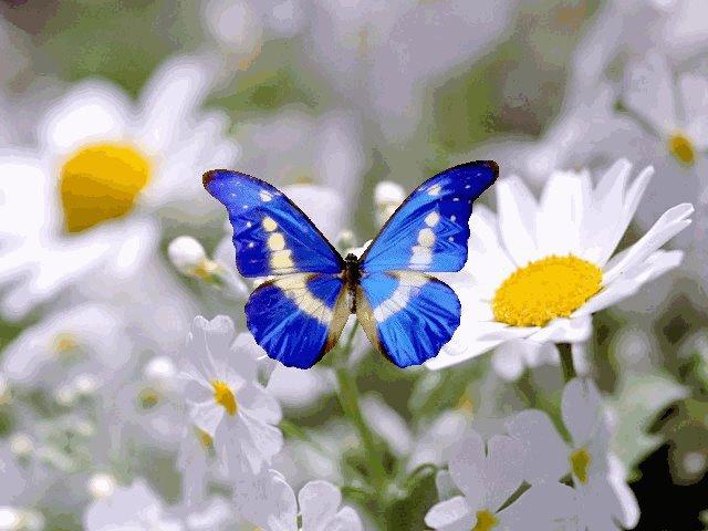 butterfly 44