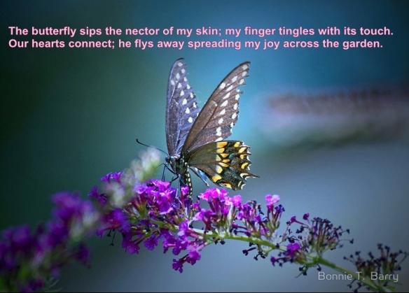butterfly poem 10