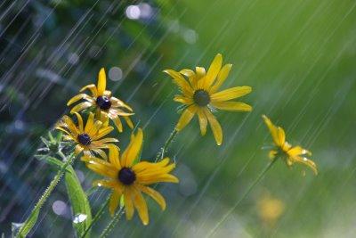 rain on flowers2