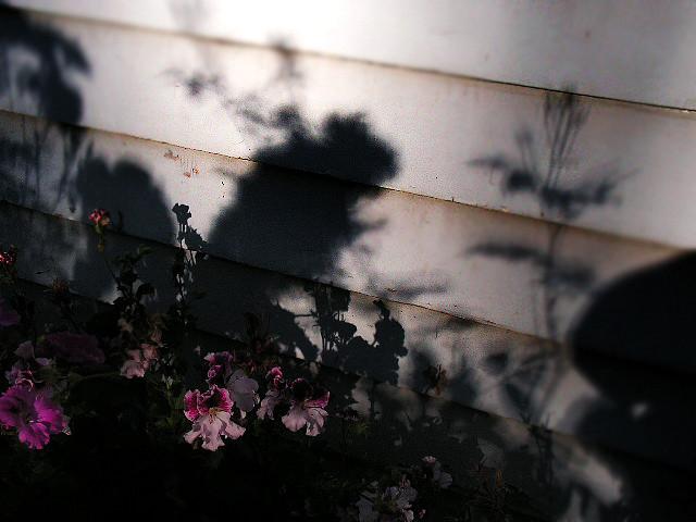 shadowed ones