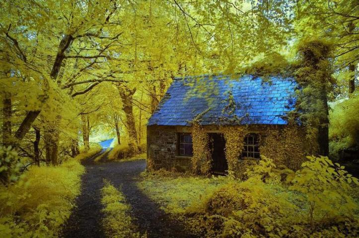 forest_house_5