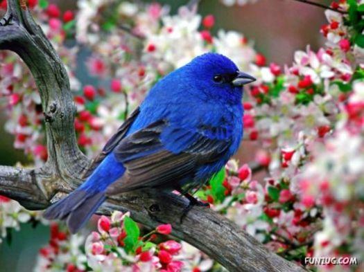 song bird1