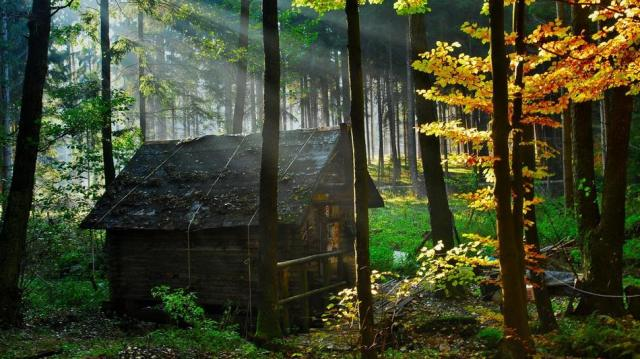 forest_house_2