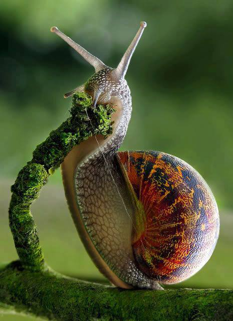 snail colored