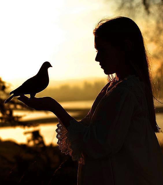 child of dove