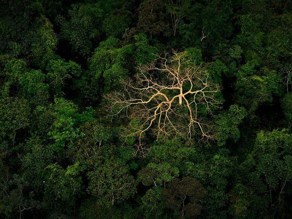tree-canopy-honduras_63787_990x742 (1)
