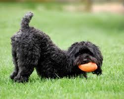 frisky dog