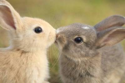 animal-love-2