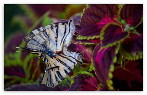butterflies_in_love-t2