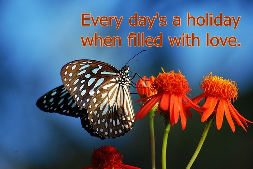 holiday butterfly