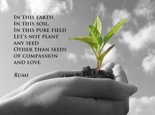 Seeds-of-Compassion-and-Love-Rumi