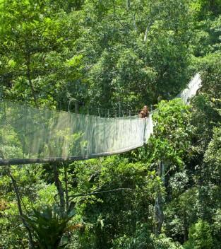 woman in jungle3