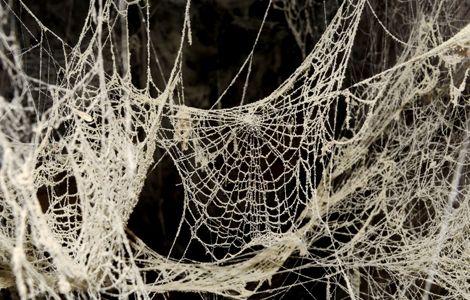 dusty-spiderwebs_26691_600x450