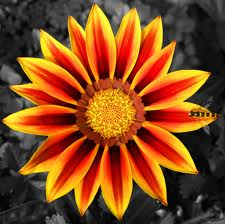 perfect flower5