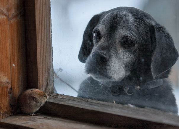 dog and mouse