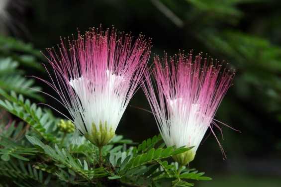 2-flowers1-565x376