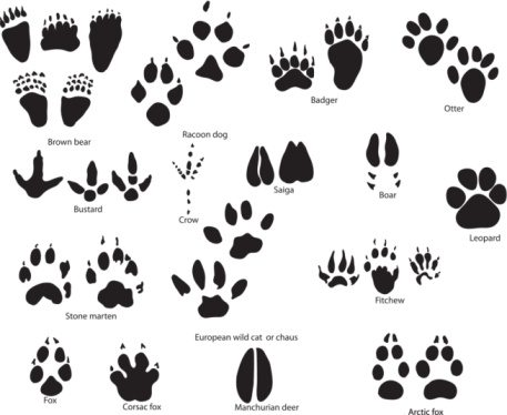 paw-print-clip-art-other-animals03-large