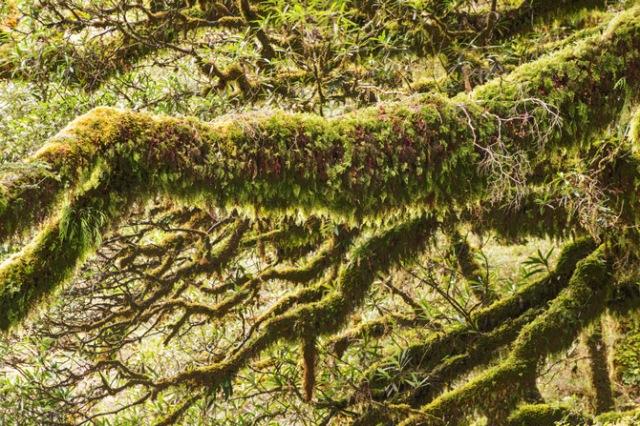 04-fiordland-shaggy-tree-limb-670