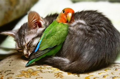 animal love3