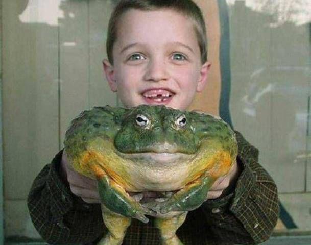 biggest-frog