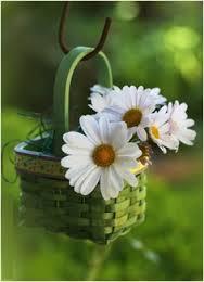 daisies in basket