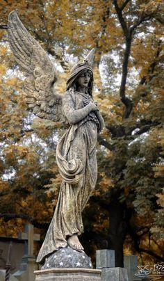 acceptance angel