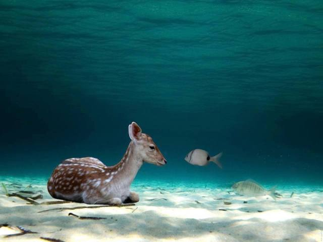 fawn and fish