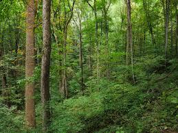 appalachian forest