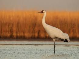 pond bird2