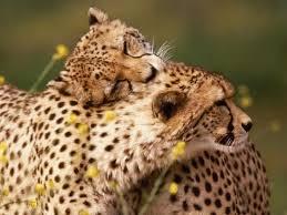 sharing love