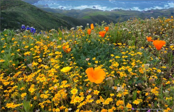Spring-Wildflowers-Garapatta-State-Park