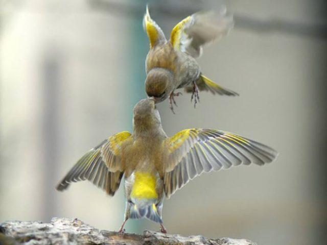 birds20