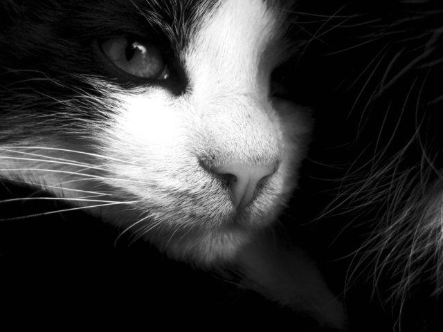 proud_cat_by_szenka-d335cdo