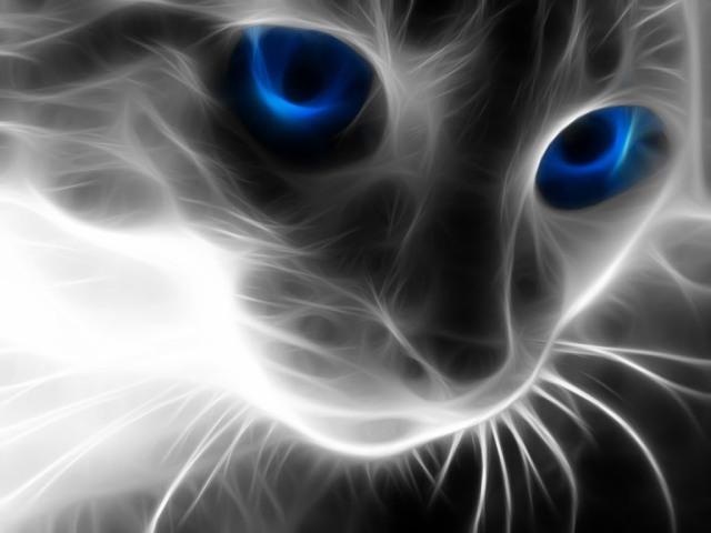 Animal-Cat-67800