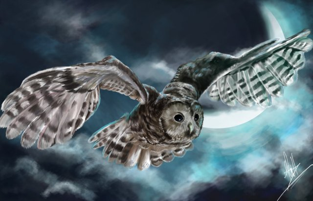 owl_on_a_mystical_night_by_ferquillo-d5oarny