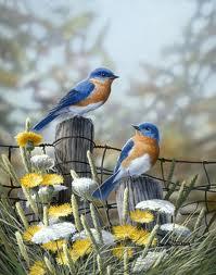 song bird3